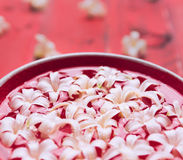 White flowers in red bowl with water Royalty Free Stock Photo