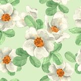 White flowers. Seamless floral pattern 1. Hand drawn floral seamless pattern Stock Photos