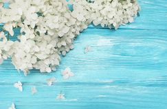 White flowers season vintage spring greeting template petal fresh on blue wooden background beauty. White flowers on blue wooden background beauty frame fresh Royalty Free Stock Photo