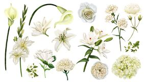 Free White Flowers Set, Watercolor Hand Drawn Vector Stock Photos - 180048273