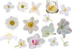 White flowers set on white Stock Images