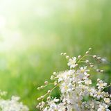 White flowers in soft focus Stock Photos
