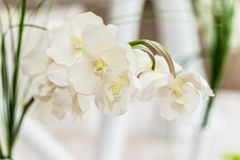 White flowers. Some white flowers in a restaurant during a wedding Stock Photos
