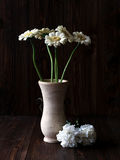 White flowers. Still life of white flowers in the late afternoon light Stock Image