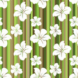 White flowers on a striped background. Stock Images