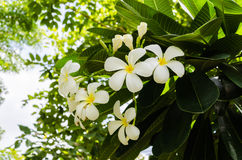 White flowers. In sunny day royalty free stock photo