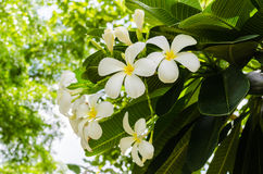 White flowers. In sunny day stock photos