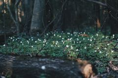 White Flowers Surrounded by Green Grasses royalty free stock photo