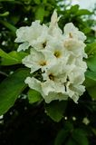 White flowers surrounded by green leaves, natural contrasting colors of flowers. stock photos
