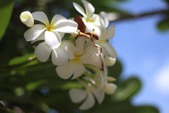 White flowers. On the tree Stock Image