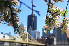 White Flowers on Tree Branch in Front of Building Structures during Day Time Royalty Free Stock Photos