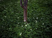 White flowers under tree after rain. royalty free stock image
