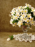 White flowers in vase Royalty Free Stock Photography