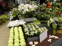 White Flowers and Vegetables Display Royalty Free Stock Photo