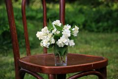 White flowers on the vintage chair in the spring garden. royalty free stock photo