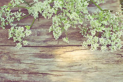 White flowers on vintage wooden background royalty free stock photos