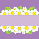 White flowers on a violet background Royalty Free Stock Images