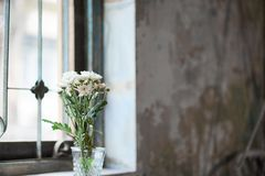 White flowers by the window. Soft window lighting, copy space. White flowers by the window. Soft window lighting and soft focus. Copy space on the right for your royalty free stock photo