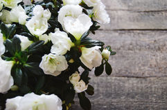 White flowers on a wooden background Stock Photography