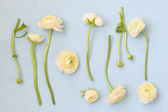 White flowers on wooden background. flat lay Stock Images