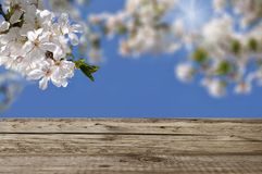 White flowers and wooden boards Stock Images