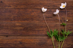 White flowers on wooden table. Top view, copy space. royalty free stock images