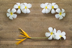 White flowers on wooden. Top view old wooden background with white flowers Royalty Free Stock Photo