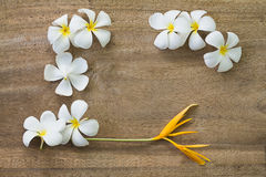 White flowers on wooden. Top view old wooden background with white flowers Royalty Free Stock Photos
