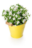 White flowers in yellow bucket Stock Photo