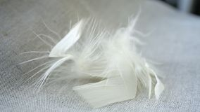 White fluff and feathers. On a linen napkin royalty free stock photos