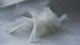 White fluff and feathers. On a linen napkin royalty free stock photo