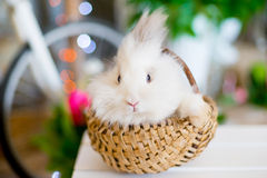 White fluffy bunny in a basket Stock Photo