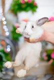 White fluffy bunny Stock Photography