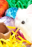White Fluffy Bunny Eats Chocolate Egg Stock Photos