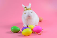 White fluffy bunny sitting on clean pink background and colorful egg, little white rabbit Royalty Free Stock Photography
