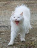 White fluffy cat Royalty Free Stock Photos