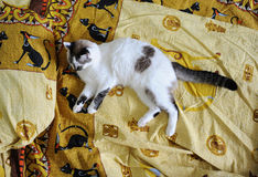 White fluffy cat lies on the bed, on bed linen with a print of Egyptian cats. White fluffy cat lies on the bed, on bed linen with print of Egyptian cats stock images