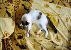 White fluffy cat lies on the bed, on bed linen with a print of Egyptian cats. White fluffy cat lies on the bed, on bed linen with print of Egyptian cats royalty free stock photos