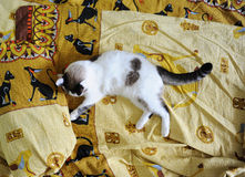 White fluffy cat lies on the bed, on bed linen with a print of Egyptian cats. White fluffy cat lies on the bed, on bed linen with print of Egyptian cats royalty free stock photography