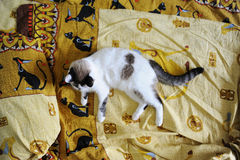White fluffy cat lies on the bed, on bed linen with a print of Egyptian cats. White fluffy cat lies on the bed, on bed linen with print of Egyptian cats stock photos