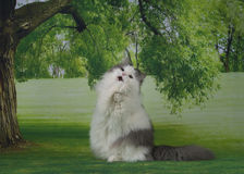 White fluffy cat on spring grass Royalty Free Stock Photo