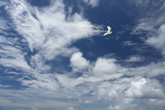 White, fluffy clouds and white fairy tern bird in the blue sky. Royalty Free Stock Photo