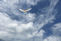 White, fluffy clouds and white fairy tern bird in the blue sky. Royalty Free Stock Photos