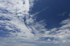 White, fluffy clouds and white fairy tern birds in the blue sky. Stock Photo