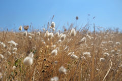White fluffy grains Stock Photo