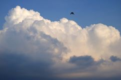 White fluffy puffy cumulus clouds on the blue sky with a silhouette of a flying bird Stock Images