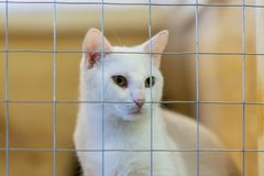 White fluffy sad homeless alone cat, looking out from cage behind bars in a shelter waiting for someone to adopt him stock photography