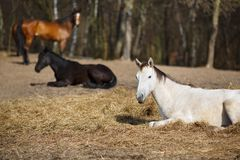 White foal Royalty Free Stock Images