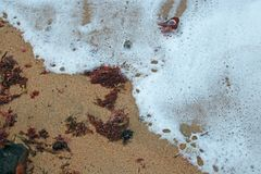WHITE FOAM AND RED SEAWEED ON SAND Royalty Free Stock Photos