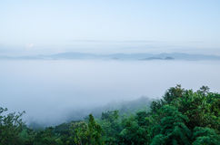The white fog in morning. Is so beauty Stock Image